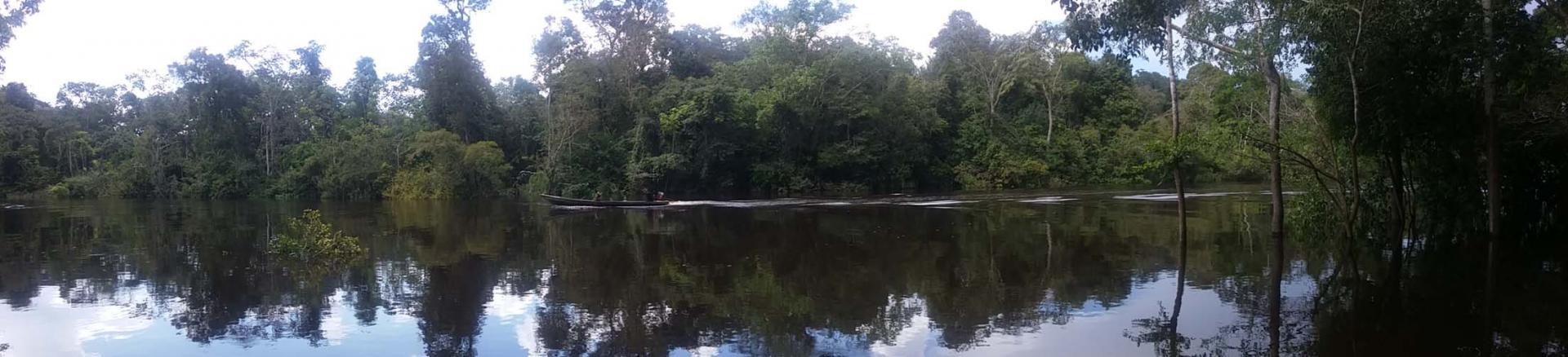 Amazone, les affluents